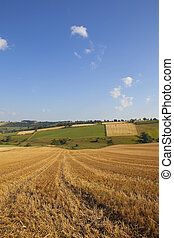 harvest time scenery - a golden harvest agricultural...