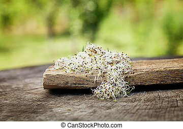 Alfalfa sprouts - Heathy eating food Alfalfa sprouts on wood...