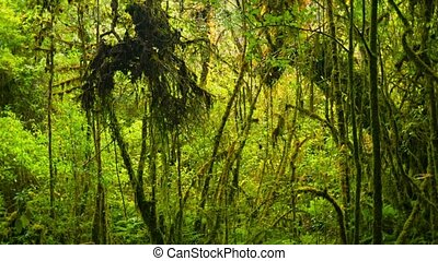 Thickets of tropical rainforest - Video 1920x1080 - Thickets...