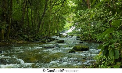 Forest, a small river near Chiang Rai, Thailand - Video...