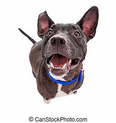 Happy Black Mixed Breed Dog