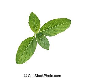 Spearmint - Single spearmint mint isolated on white...