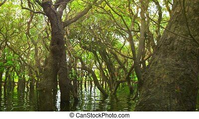 Cambodia Flooded forest and wooden bridge - Video 1080p -...