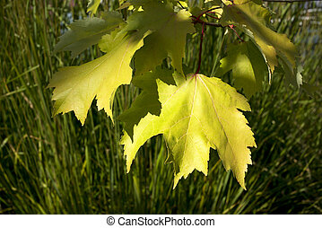Leaves on the branch
