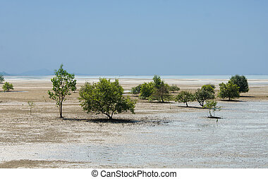 Mangrove trees and roots on the beach - Mangrove trees and...