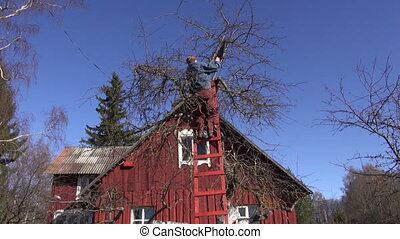 worker in farm cutting branches on apple tree treetop in...