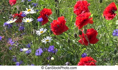 colorful summer flower background - colorful summer time...