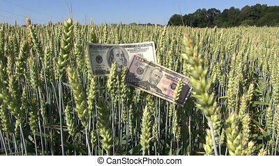 agriculture business money growth on wheat field USA usd...