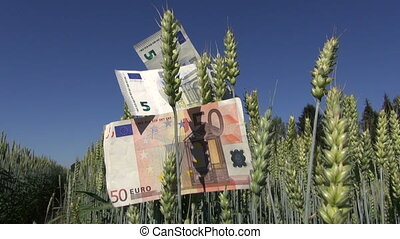 euro banknotes on wheat field ears