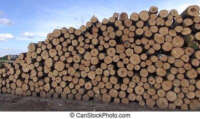 Freshly cut tree logs stack on field near forest
