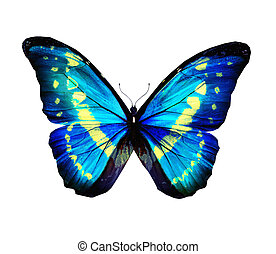 Morpho blue turquoise butterfly , isolated on white