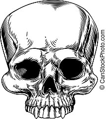 Skull drawing - A drawing of a human skull in a etched...