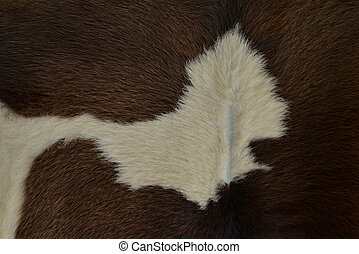 Brown and white hairy texture of cow skin