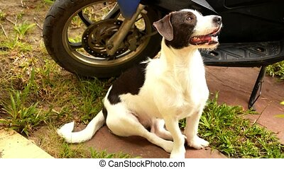 Cute Dog Sitting Outdoors near Bike HD, 1920x1080