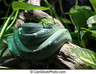green snake on branch in jungle