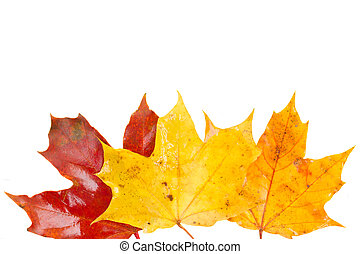 border of yellow, orange  and red fall leaves