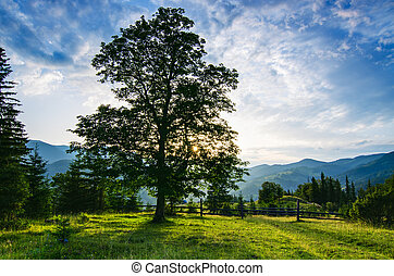 Carpathian mountain landscape with tree - Carpathian...