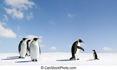 Reaching out - Emperor penguin reaches out to Adelie penguin