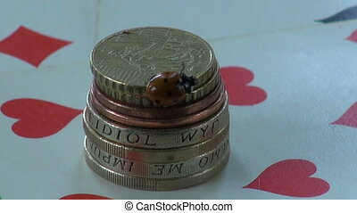 ladybug ladybird on money coins - beautiful lady luck u2013...