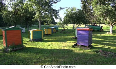 garden apiary and beehive - beautiful summer morning in old...