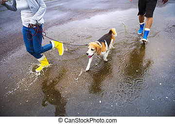 Dog walk in rain - Couple walk dog in rain. Details of...