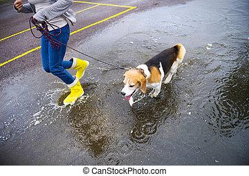 Dog walk in rain - Couple walk dog in rain. Details of...