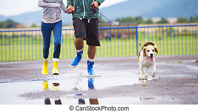 Dog walk in rain - Couple walk dog in rain Details of...