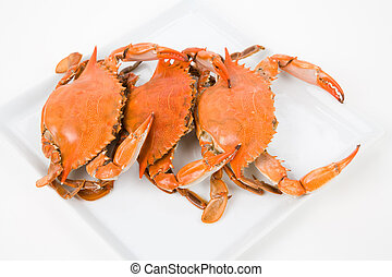 Crab - Blue Crab with white background