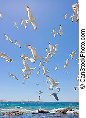 swarm of flying sea gulls - swarm of sea gulls flying close...