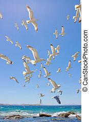 Enjambre, vuelo, mar, Gaviotas