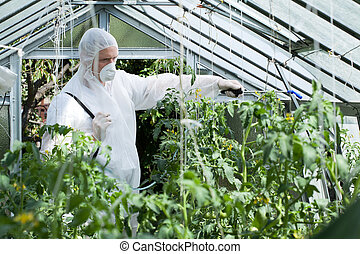 Spraying plants in greenhouse - Horizontal view of spraying...