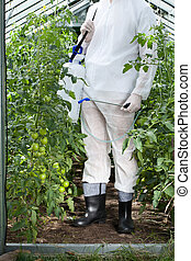 Man after spraying tomatoes in greenhouse, vertical