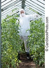Man spraying tomatoes in a greenhouse, vertical