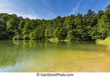 Summer landscape at the lake and forest with mirror...