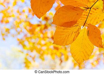 オレンジ, 秋, 葉, 公園
