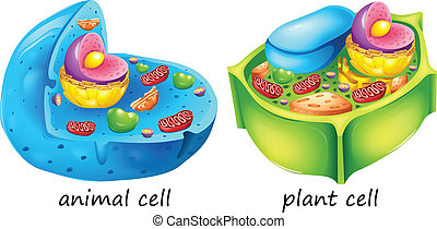 Animal and plant cells - lllustration of the animal and...