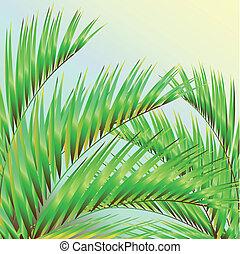 palm tree,