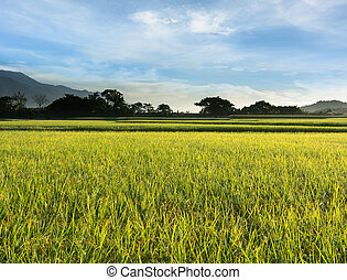 Rural scenery of paddy farm in Chishang Township, Taitung...