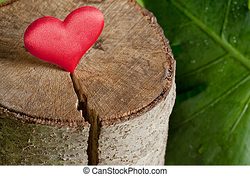 Heart on a tree cut - Ecology Concept, Heart on a Tree cut