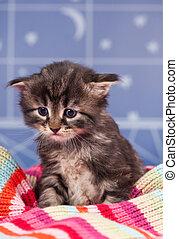 Sad kitten - Sad siberian kitten in a warm knitted scarf...