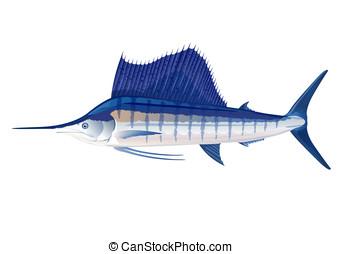 Sailfish - Atlantic sailfish in profile, eps10 illustration...