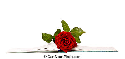 Loving Bookmark - Red Rose in Between Book Pages isolated...