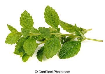 Lemon Balm (Melissa Officinalis) Isolated on White...
