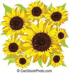 sunflower pattern on white background