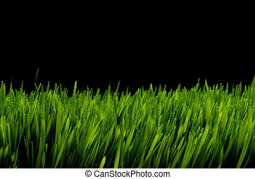 Close-up image of bright green grass