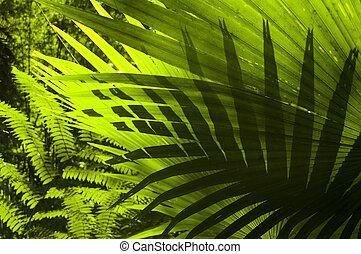 tropical, bosque