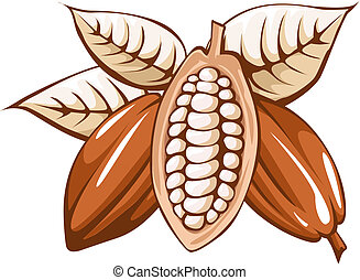 cocoa bean on white background