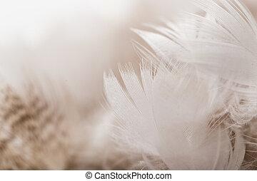 pato, plumas, como, Un, fondo., macro,