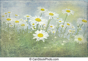 daisy field with texture overlay