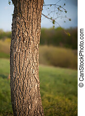 tronco, árvore